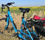 Fahrrad mit Blick auf Blumenfeld