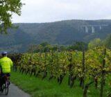 Radfahren entlang der Weinberge