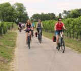 France Bordeaux cyclists through wine fields