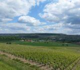 Frankreich Champagne Weinberge