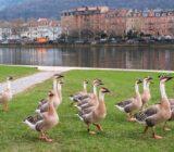 Straßburg−Mainz: Heidelberg