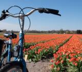 BBT bike fiets