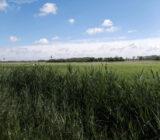 Brügge Landschaft