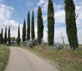 Italy Tuscany Sail and Bike pine trees