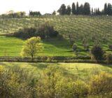 Italien Toskana Sail und Bike: Weinberge