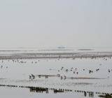 Terschelling_Wattenmeer